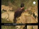 необычное поведение диких животных